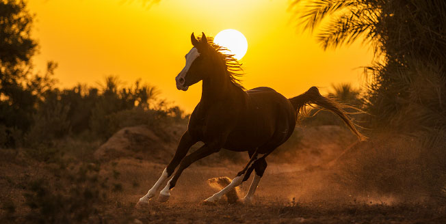 Equine photo tour – Magical Djerba 2014