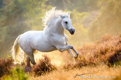 Magical Sunset • Equine Photography Workshop